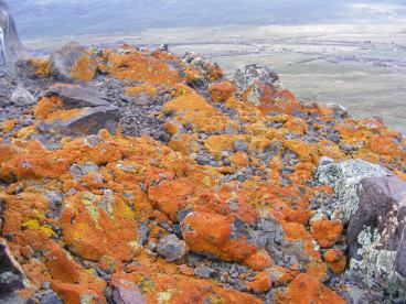 The surreal and psychedelic orange lichen found on Point 8680