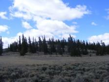 Douglas fir grove, some beetle kill, near Road 3121