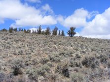 Sagebrush and conifer in Home Gulch
