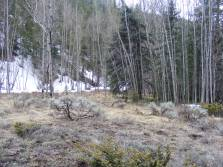 Spring in Limekiln Gulch, a typical scene at this time in the Rocky Mountains