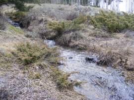 Small, forest dwelling juniper line the waters of Limekiln Gulch