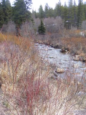 Red barked willow lining Quartz Creek