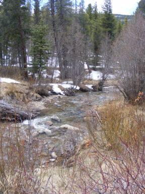 Quartz Creek near the Pitkin Campground