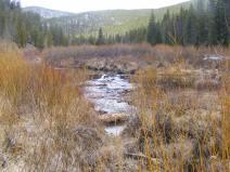 Looking upstream on Quartz Creek