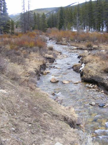 Crystal clear Quartz Creek flowing down from the Sawatch Range