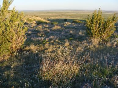 Early sunlight on the Great Plains