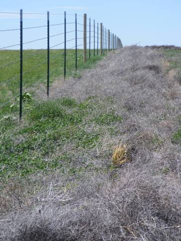 The new, wildlife-friendly fence to the left. The old fence was where the line of sagebrush had caught up against it