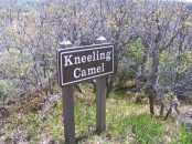 Gambel's Oak, Querces gambelii, behind the sign for Kneeling Camel on the North Rim of the Black Canyon of the Gunnison