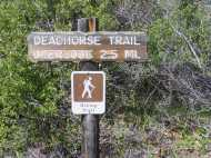 The short hike to Deadhorse Trail Overlook