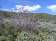A typical landscape on Mesa Inclinado, here on the Deadhorse Overlook Trail
