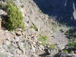 It would be a challenge to descend this gully from the rim of the Black Canyon of the Gunnison at Deadhorse Overlook