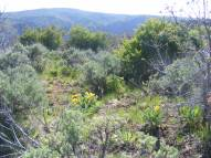 Vegetation on Mesa Inclinado
