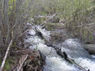 The creek that drains Myers Gulch
