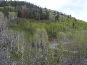 Aspen forest above Colorado 92 and Mesa Creek