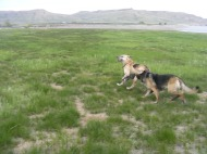 "Draco and Leah at Blue Mesa Reservoir, playing ""ball"" or ""stick"" as the case may be"