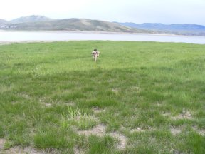 Draco running with the stick near Blue Mesa Reservoir