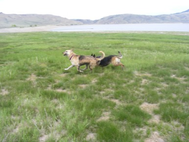 "Draco and Leah having a rousing game of ""ball"" at Blue Mesa Reservoir"