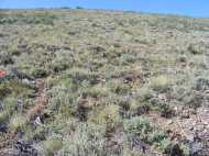 The sagebrush sea above North Beaver Creek, dotted with Castilleja spp.