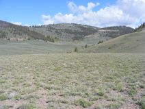 On Sun Creek, the transition from sagebrush steppe to forest