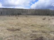 Sun Park at ten thousand feet, grass yet to green up and aspen yet to leaf out