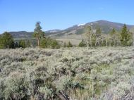 Above and to the north of Alkali Creek, looking at the northern ridge of Sawtooth Mountain