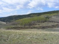 Forest above Townsite Gulch