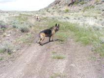 Leah and Draco on Gunnison National Forest Road 854