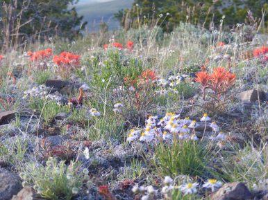 Fine mosaic of flora near Point 8882