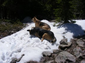 Leah and Draco enjoying a patch of snow on Round Mountain