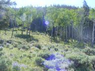 Sun streaking through a typical North Gulch setting in the Cochetopa Hills