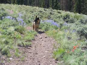 Leah on Trail 501