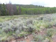 Typical of the Cochetopa Hills is this setting of sagebrush, aspen and conifers; along Trail 493