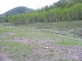 Aspen in Barret Park