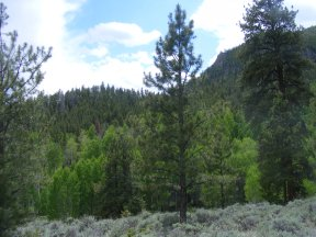 More sagebrush, aspen and conifer - on the Right Hand of Needle Creek