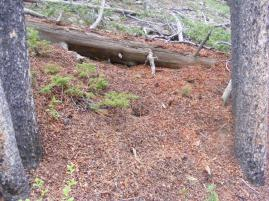A squirrel midden on Long Branch