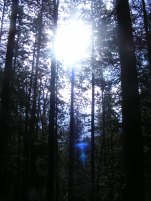 Sunlight obscured by the dense forest on Long Branch