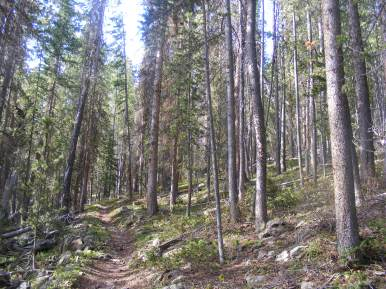 Climbing up from Long Branch through the forest to the Continental Divide in the Cochetopa Hills