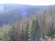 Looking out over the upper reaches of Long Branch, part of the Gunnison National Forest
