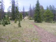 The Colorado and Continental Divide Trail near the Long Branch Trail
