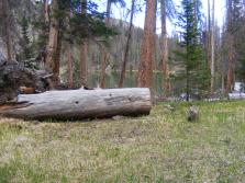My campsite from the previous year at Baldy Lake