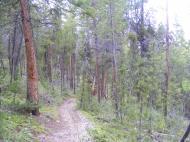 Trail 491 meanders down from Baldy Lake in the Gunnison National Forest