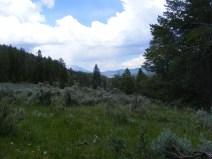 In West Branch