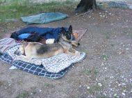 Draco and Leah at camp, Middle Quartz Creek