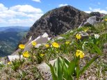 Cascade Mountain silhouetted by Glacier Lilies, Marsh Marigolds and a yellow buttercup