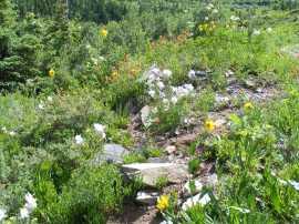 Wildflower garden in Baxter Basin