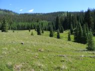 Forested meadow on a tributary of Larson Creek