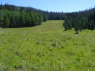 A meadow adjacent to the Larson Lakes Trail in the Uncompahgre National Forest