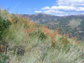 Castilleja spp. on the Crystal Lake Trail