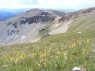 Alpine wildflowers, looking at Fossil Mountain, where I had been