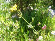 Variety of wildflowers near Lamphier Lake